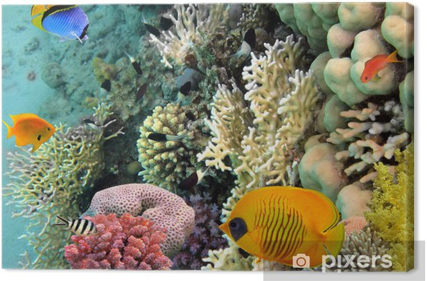 Leinwandbild Foto von einer Koralle Kolonie, Rotes Meer, Ägypten - Fische