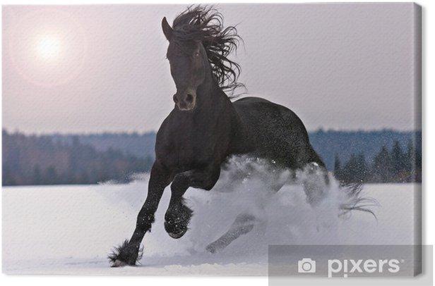 Leinwandbild Friesisch Pferd auf Schnee - Themen