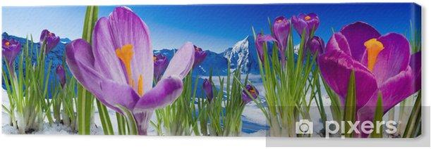 Leinwandbild Frühling in den Bergen - Krokus Blumen im Schnee - Panorama