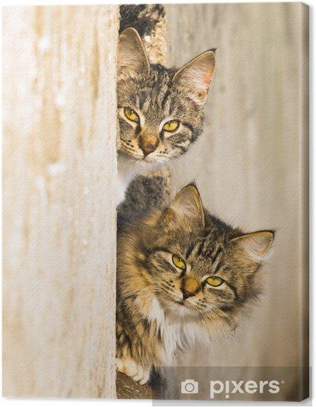 Leinwandbild Frühling Katzen - Säugetiere