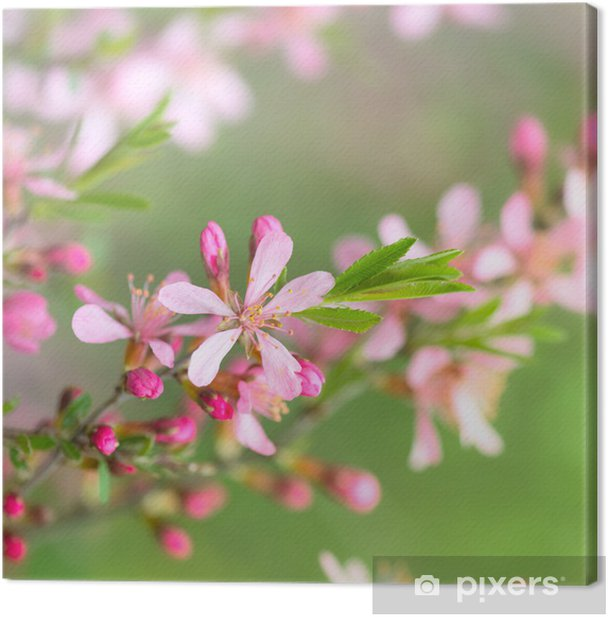 Leinwandbild Frühlingsblüten - Jahreszeiten