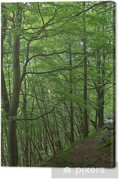 Leinwandbild Fußweg in Buchenwald - Bäume