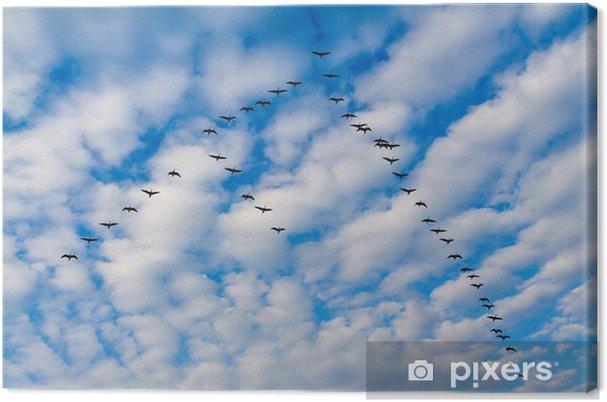 Leinwandbild Geeses - Vögel