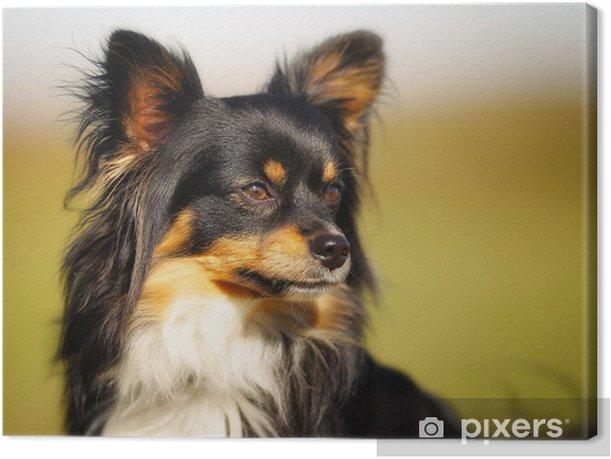 Leinwandbild Gesicht der Chihuahua - Säugetiere