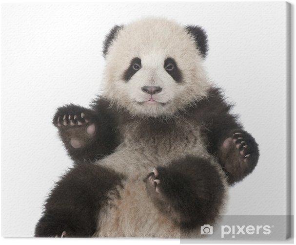 Leinwandbild Giant Panda (6 Monate alt) - Ailuropoda melanoleuca - Wandtattoo
