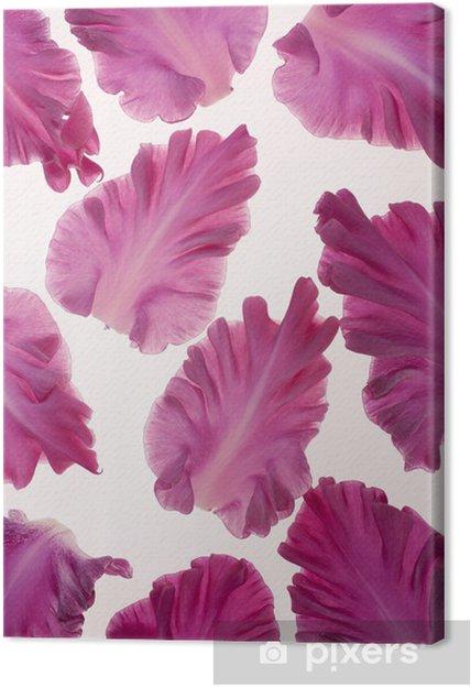 Leinwandbild Gladiolen Blütenblätter - Themen