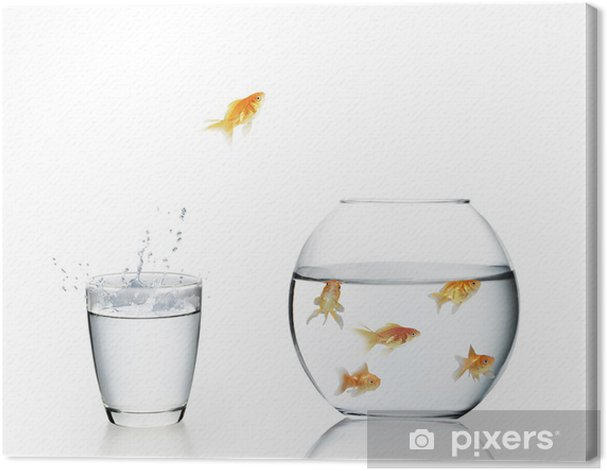 Leinwandbild Goldfisch, springen aus dem Wasser - Unterwasserwelt