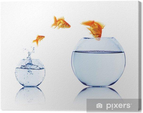 Leinwandbild Goldfische in einem Aquarium - iStaging