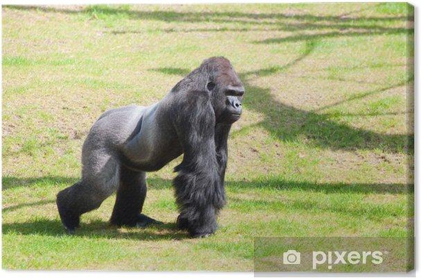 5754bc8953055 Leinwandbild Gorilla in Berlin Zoologischer Garten • Pixers® - Wir ...