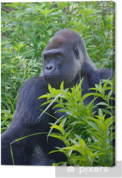 34e1a4801d169 Leinwandbild Gorilla und starrte in jungle • Pixers® - Wir leben