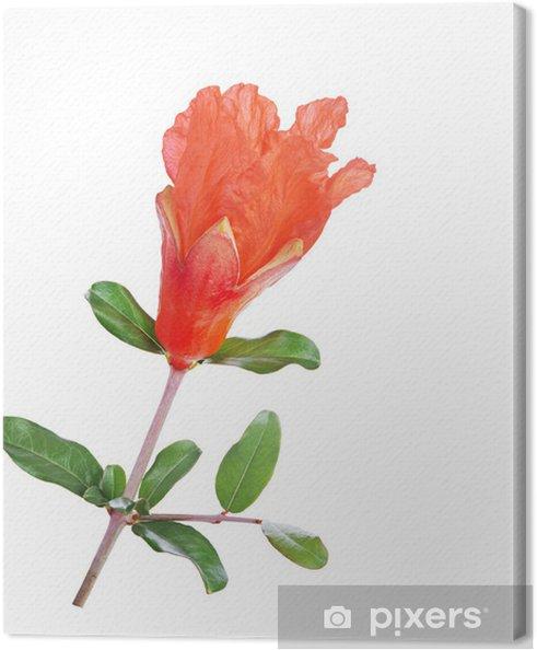 Leinwandbild Granatapfel Blume - Blumen