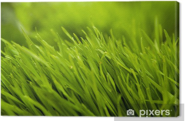 Leinwandbild Gras - Bereich