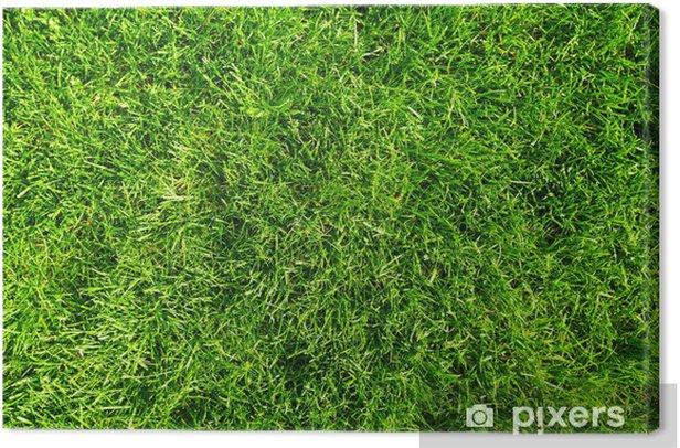 Leinwandbild Green grass - Haus und Garten