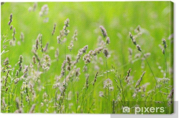 Leinwandbild Green grass - Jahreszeiten