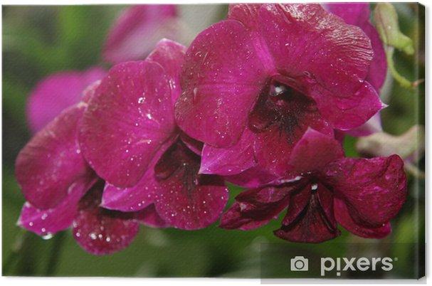 Leinwandbild Große rote Orchidee - Blumen
