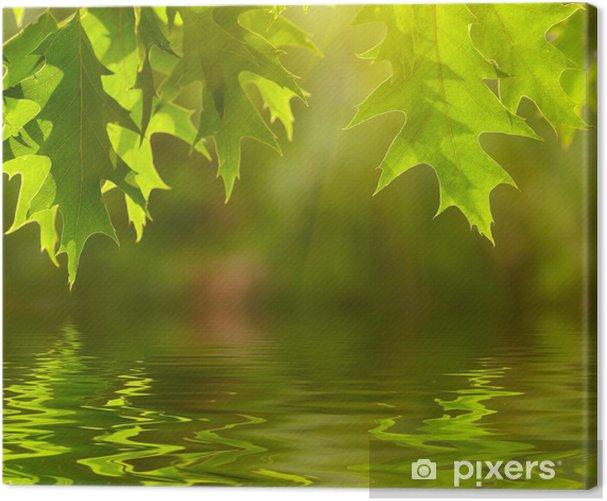 Leinwandbild Grüne Blätter spiegeln sich im Wasser. - Themen