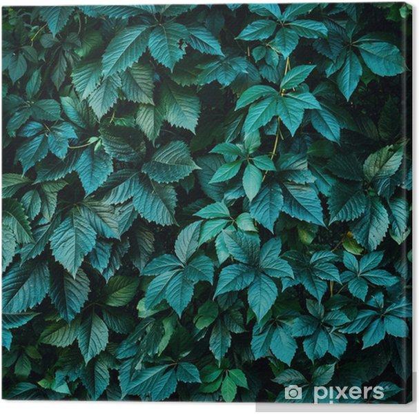 Leinwandbild Grüne Pflanze verlässt Hintergrund, Laubwand - Pflanzen und Blumen