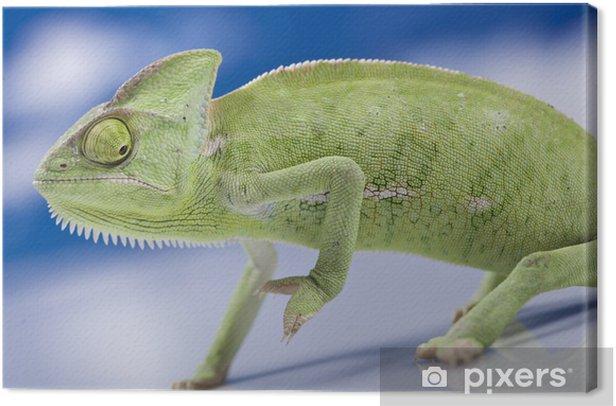 Leinwandbild Grünes Chamäleon - Themen