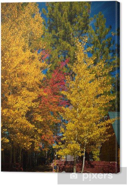 Leinwandbild Herbst Bäume - Amerika