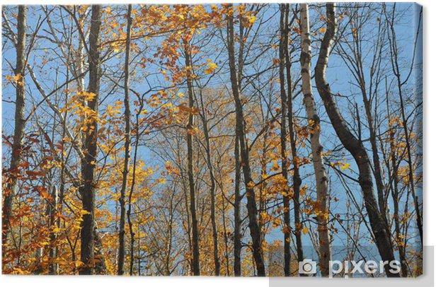 Leinwandbild Herbstlicher Laubwald - Jahreszeiten