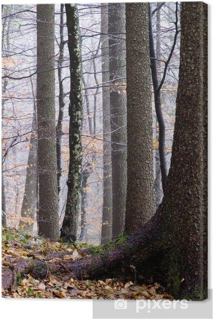 Leinwandbild Herbstwald - Bäume