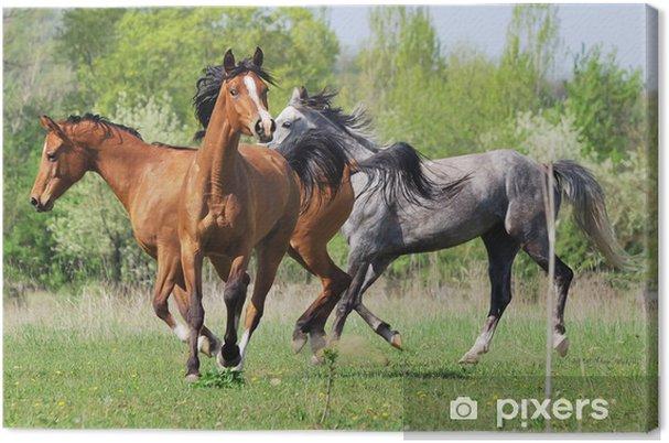 araber pferde bilder  ausmalbilder