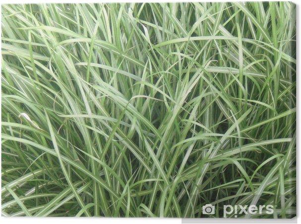 Leinwandbild Hohes Gras Im Sommer Pixers Wir Leben Um Zu Verändern
