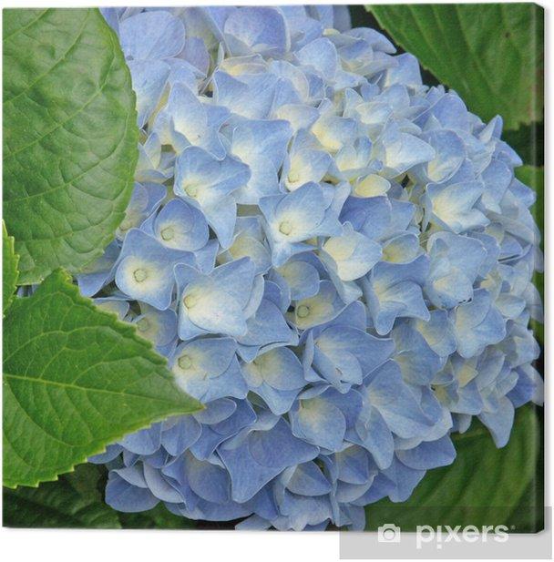 Leinwandbild Hortensia - Blumen