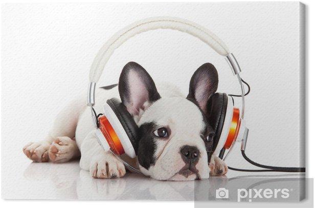 Leinwandbild Hund Musik hören mit Kopfhörern auf weißem backgro - Themen