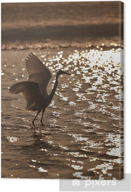 Leinwandbild Indian Reiher bei Sonnenuntergang - Vögel