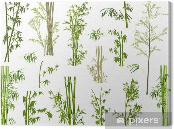 Leinwandbild Isoliert großen Satz von grünen Bambuszweigen - Pflanzen