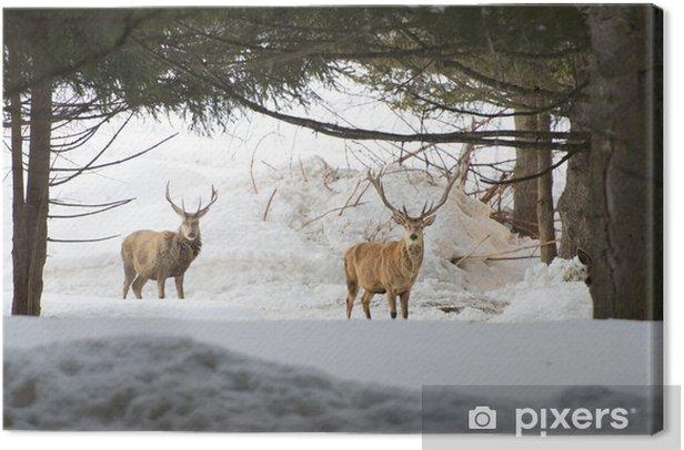 Leinwandbild Isoliert Rotwild auf dem weißen Schnee Hintergrund - Themen