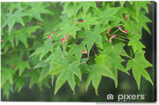Leinwandbild Japanischer Ahorn-4 - Pflanzen