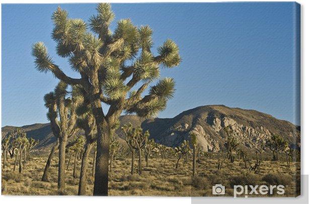 Leinwandbild Joshua Trees - Wüsten
