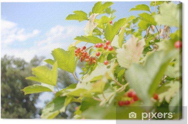 Leinwandbild Kalina - Pflanzen