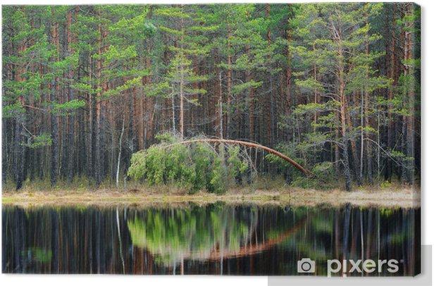 Leinwandbild Kiefernwald und einem See - Bäume