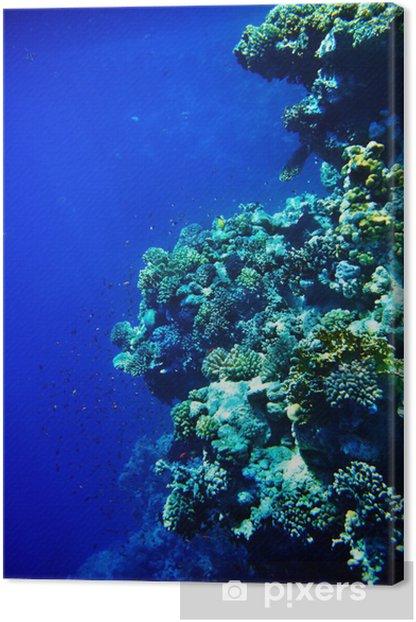 Leinwandbild Korallenfische im blauen Wasser. - Blumen