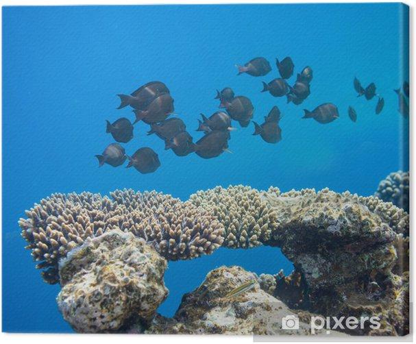 Leinwandbild Korallenfische - Unterwasserwelt
