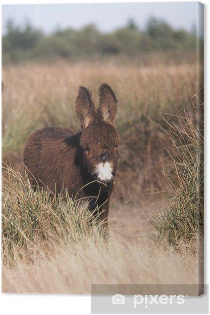 Leinwandbild L'ane Baudet du Poitou dans les champs - Säugetiere