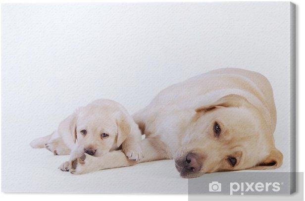 Leinwandbild Labrador-Welpe und seine Mutter - Säugetiere