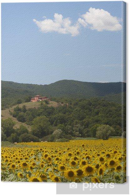 Leinwandbild Landschaft zwischen Lazio und Umbrien (Italien) mit Sonnenblumen - Land
