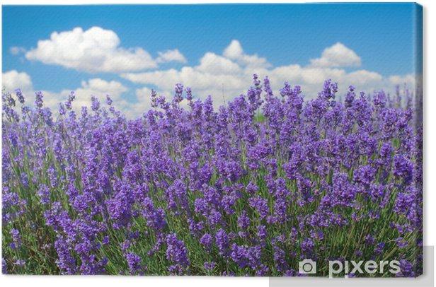 Leinwandbild Lavendel gegen blauen Himmel Hintergrund - Themen