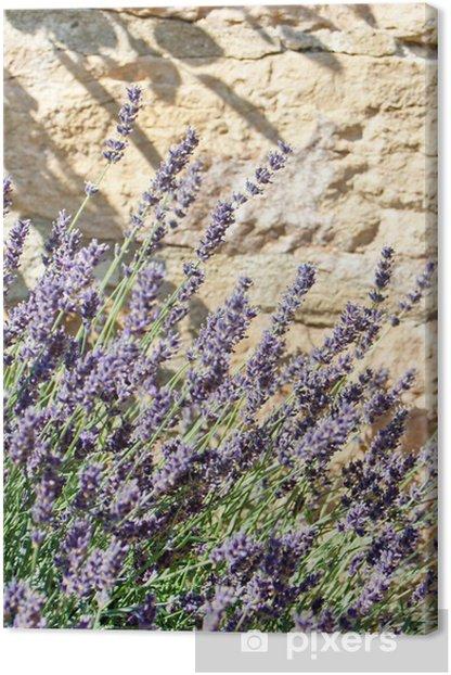 Leinwandbild Lavendel im Sommer - Landwirtschaft