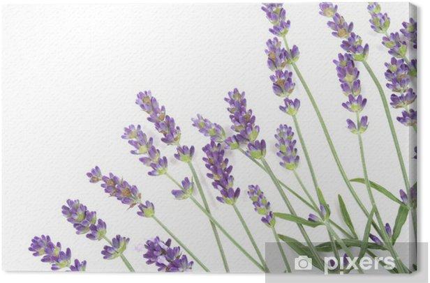 Leinwandbild Lavendel - Beauty und Körperpflege