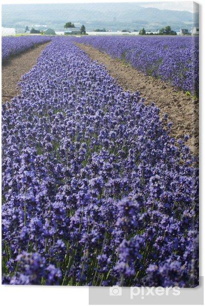 Leinwandbild Lavendel - Themen