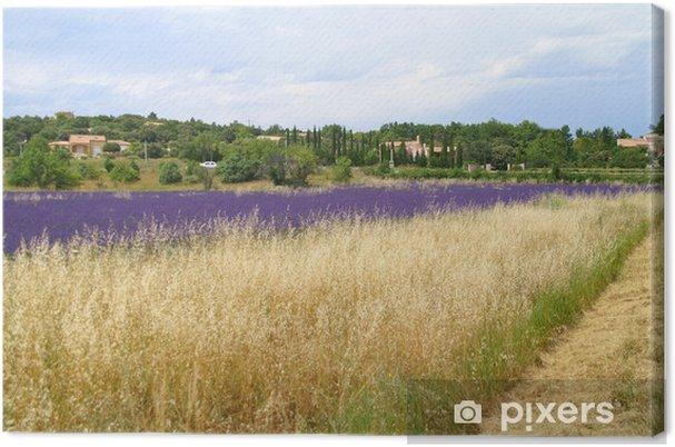 Leinwandbild Lavendelfelder - Landwirtschaft