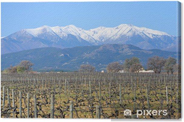 Leinwandbild Le Canigou dans les Pyrénées Orientales - Jahreszeiten