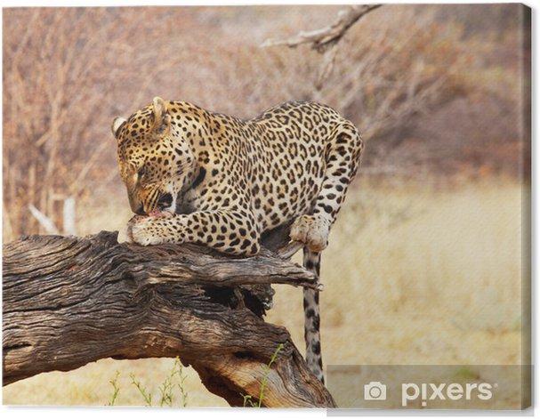 Leinwandbild Leopard - Säugetiere