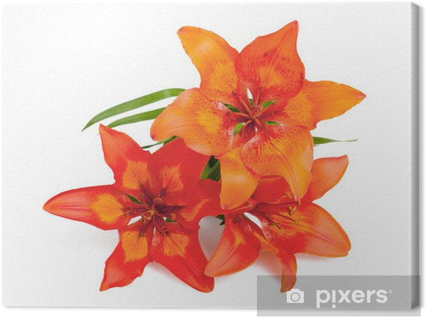 Leinwandbild Lilium martagon - Blumen