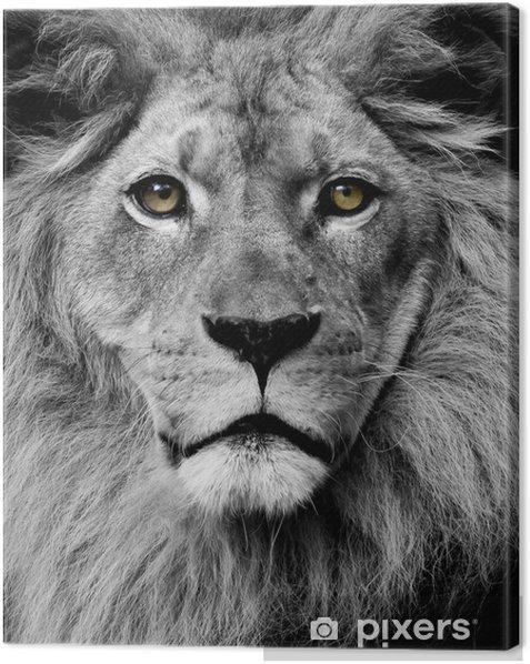 Leinwandbild Lion Augen -